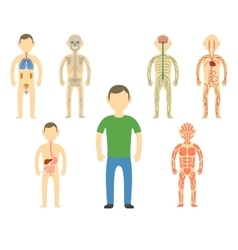 Cartoon man body anatomy vector image vector image