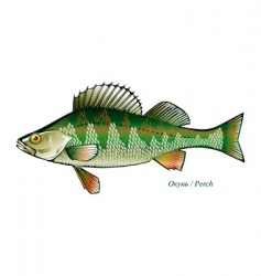 Fish perch vector vector