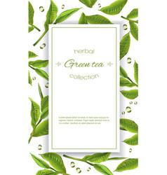 Green tea banner vector