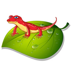 Red gecko on green leaf vector