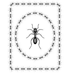 Ant insect design vector