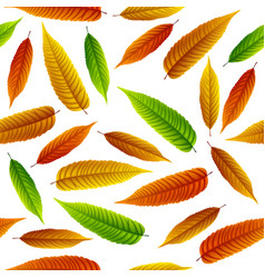 colorful rowan leaves isolated on white background vector image