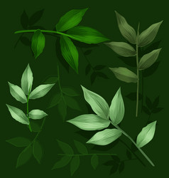 green leaf set vector image