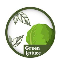 Green lettuce vegetable fresh healthy label vector