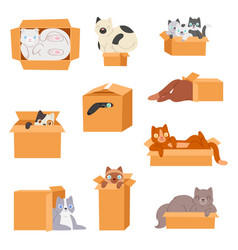 Cat in box kitty pet character domestic vector