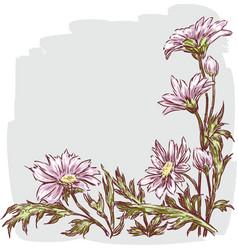 Garden daisies vector
