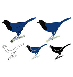 Gralha azul bird in profile bird vector