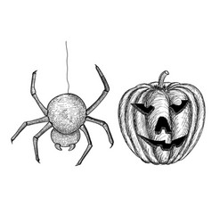 halloween symbols - spider and carved pumpkin vector image