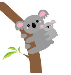 koala bear face head on tree branch cute vector image