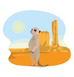 Meerkat in the desert vector