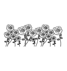 silhouette bunch roses with stem and leaves floral vector image