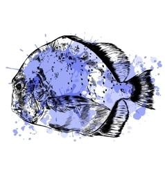 Sketch of hand drawn fish vector