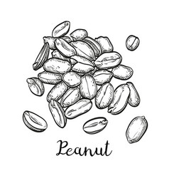 handful of peanut vector image