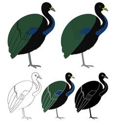 Jacamim bird in profile view vector