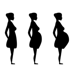 pregnant women in the three trimesters vector image
