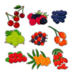 The theme berries vector