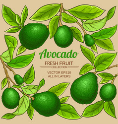 avocado branches frame on color background vector image