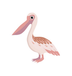 Beautiful pelican bird on a vector