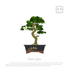 Bonsai tree in pot on white background vector
