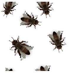 lot detailed realistic flies insects on white vector image