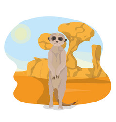 meerkat in the desert vector image