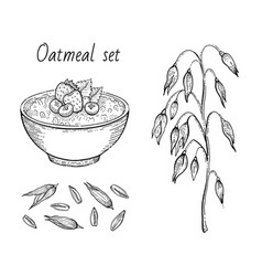 Oats sketch oatmeal porridge bowl with milk vector