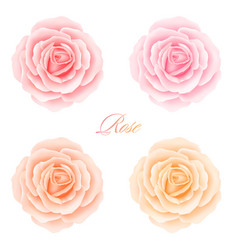 Set of roses flowers vector