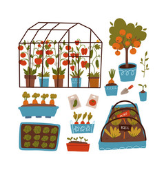 set plants and scenes - greenhouse beds pots vector image