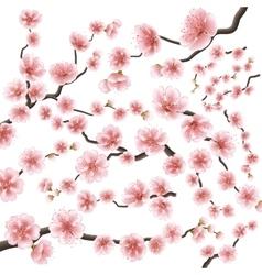 Set sakura japan cherry branch eps 10 vector