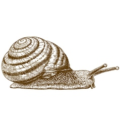 engraving snail vector image vector image