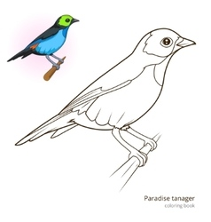 Paradise tanager color book vector image