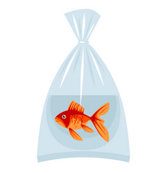 Goldfish in a plastic bag with water vector