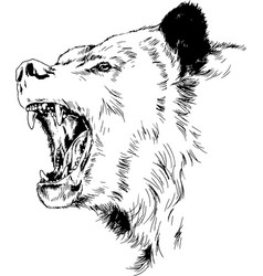 grinning face a snarling bear painted hand vector image
