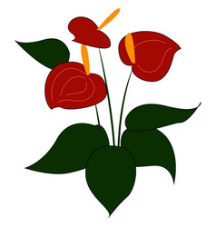 Red anthurium on white background vector