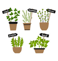 set of herbs in pots green growing vector image