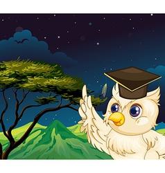 An owl bird vector image