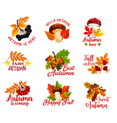 Autumn leaf acorn or berry and mushroom vector
