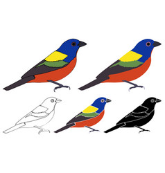 Painted bunting bird in profile view vector