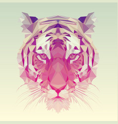 polygonal tiger graphic design vector image
