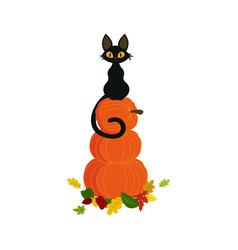 pumpkin with black cat vector image