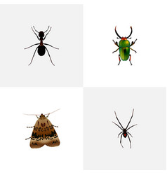 Realistic spinner butterfly ant and other vector