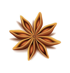 Realistic top view dry star anise fruit vector