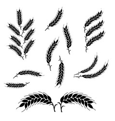 set wheat ears icons and logo organic wheat vector image