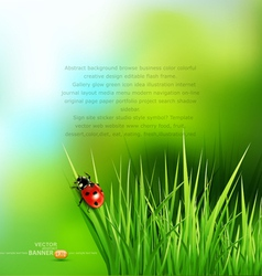 green grass and ladybug vector image vector image