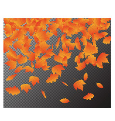 falling autumn leaves isolated on transpar vector image