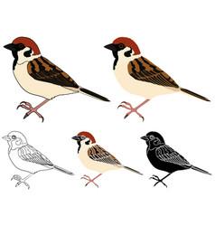 Pardal bird in profile view vector