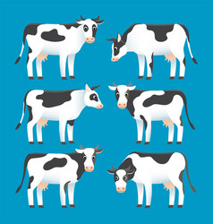 Set cute black and white spotted cows isolated vector