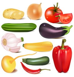 set vegetable with joint by turnip eggplant vector image