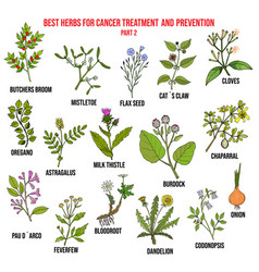 Best herbs for cancer treatment part 2 vector