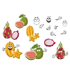 Cartoon fresh tropical fruits characters vector image